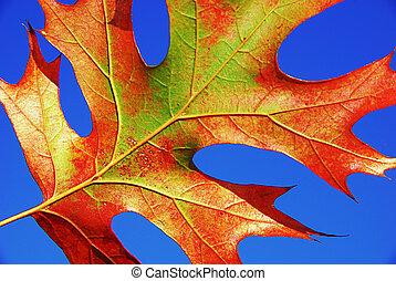 藍色, 葉子, 天空, 紅色