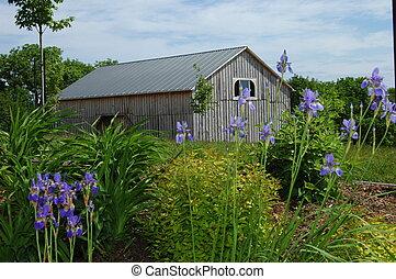 Iris Barn - Barn in rual Ontario
