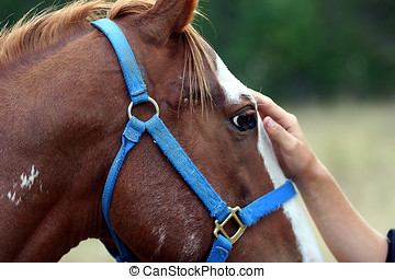 Interaction - A horse is being caressed by a person