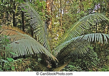 Forest rattan - Rattan palm in a forest in Thailand