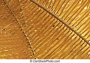 Fronds - Pattern of golden palm fronds in a Thai forest