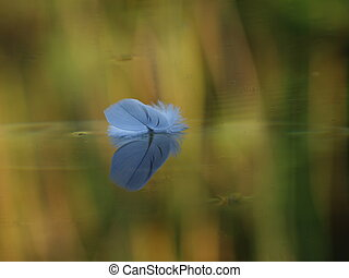Floating Feather on acalm pond