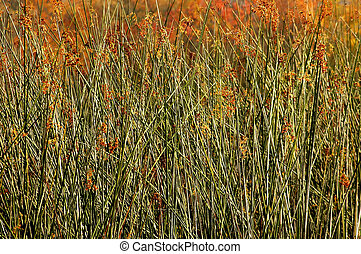 Marsh Grasses filling frame