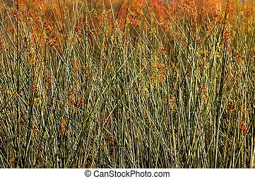 Marsh Grasses filling frame