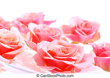 Pink roses floating in water with white space for copy