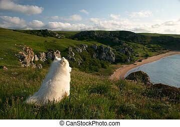 Solitary dog sitting on the high coast and looking to the...