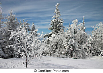 Snowy trees, firs, and bushes under snow with light clouds