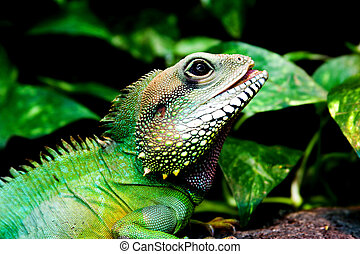 green lizard - close-up portrait of green lizard in green...