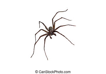 Wolf spider - A wolf spider waiting to pounce on it\\\'s...