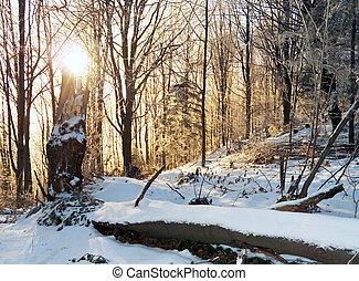 winter sunrise 2 - Sunrise in morning beech forest on...