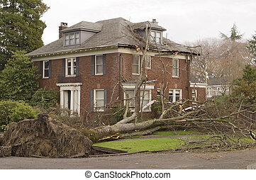 House With Tree Damage - In the windstorm of December 2006,...