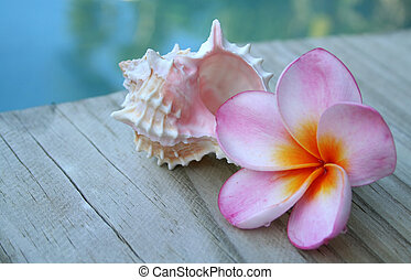 Pink Frangipani - A pink frangipani with an orange centre...