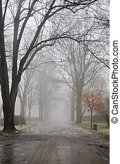 Foggy Dirt Road - A foggy day on a dirt road