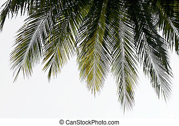 Frond silhouettes - Silhouette of a coconut palm leaf fringe