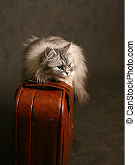 Cat on a suitcase - The image the cat on old suitcases
