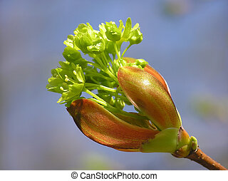 spring bud - Close-up of branch of tree with a bud on lovely...