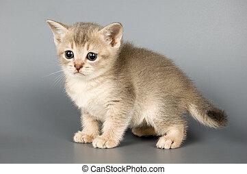 gatito, quién, primero, tiempo, posturas, estudio