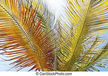 Palm crown