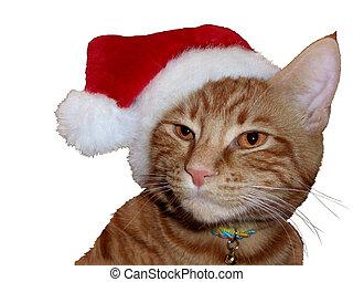 Tom cat with Santa hat
