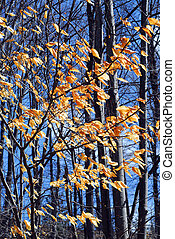 Late fall - Forest in late fall with bright blue sky