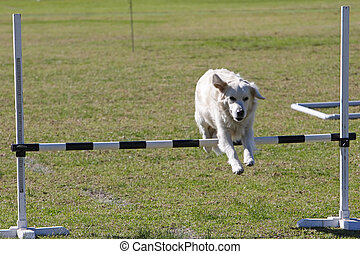 Dog Trials - Dog leaping over a bar