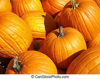 lots of big pumpkins