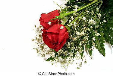 Red Roses - Two red roses with baby\\\'s breath on white...