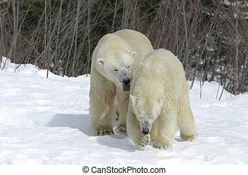follow me - taken at cochrane polar bear park