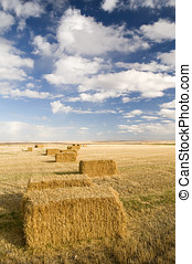 Square hay bales in a farmers field