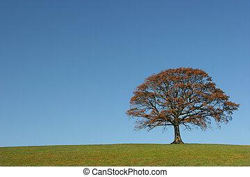 The Oak In Autumn - Oak tree in a field in Autumn, with...