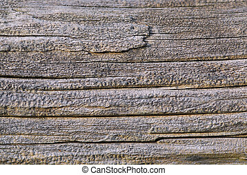 Old wood - Background of old weathered wood close up