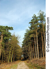 Forrest path with blue sky. - Forrest path with blue sky on...
