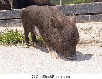 Symbol of 2007 - Small a pig a symbol of 2007