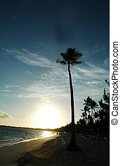 Tropical Sunrise - tropical sunrise on the beach with a tall...