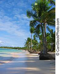 Palm Trees - Tropical palm trees along the beach / turquoise...