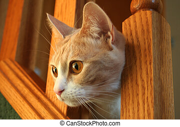 Cat - Soft Focus - an image of a cat peekin out from a...