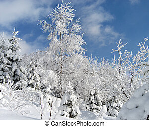 Sparkling snow 1 - winter snow and rime covered birch and...
