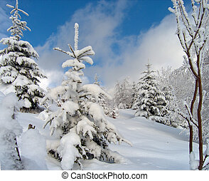 Sparkling snow (2) - winter snow and rime covered trees on...