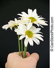 hand with daisies - hand holding white daisies