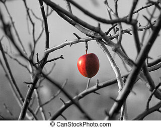 lonely apple 2 - An apple hangs from a tree on a fall...