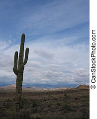 Saguaro cactus Carnegia gigantea and mountain views in lost...