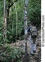 Jungle Trekking