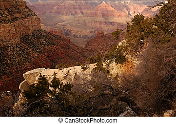 Grand Canyon in winter with bushes in foreground