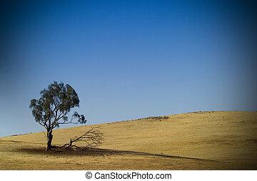 Australian dry landscape - A lone tree growing in a very dry...