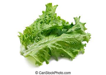 Green big fresh salad leaf on white background