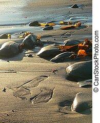 praia, pegadas
