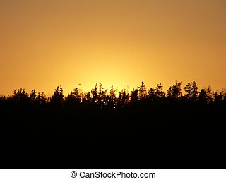 treeline - Sunset behind a tree line