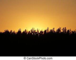 treeline - Sunset behind a tree line
