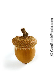 from tiny acorns grow - One acorn with clipping path...