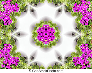 Stock image of African Violet Kaleidoscope - Unusual...